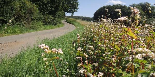 Der geteerte Weg führt uns in Richtung Oberfüllbach.