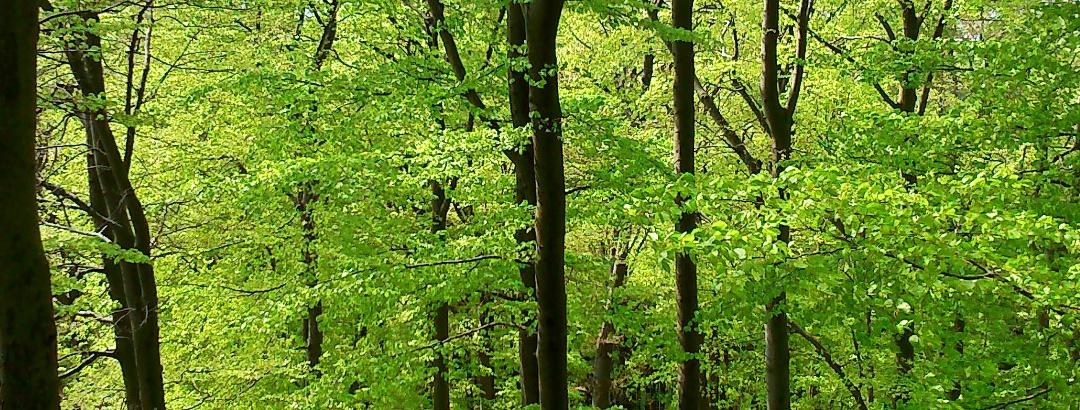 Wald bei Bontkirchen