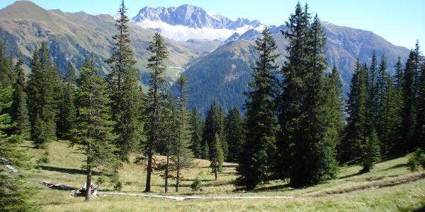 Hochmoorwanderung St. Antönien Grossried