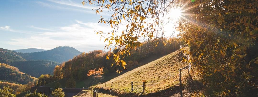 Herbstsonne über dem Kirchberg am Premiumweg Wiesensteig