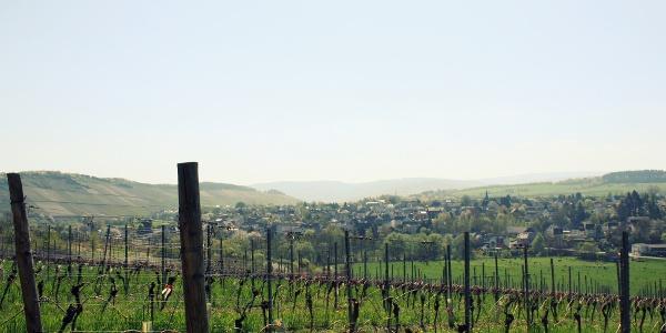 Aussicht auf Weinberge vom Kloster Siebenborn