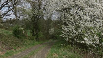 Auf der alten Kleinbahntrasse