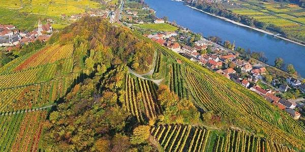 Spitz an der Donau mit dem Tausendeimerberg