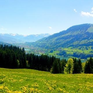 Schöner Ausblick über den Alpsee