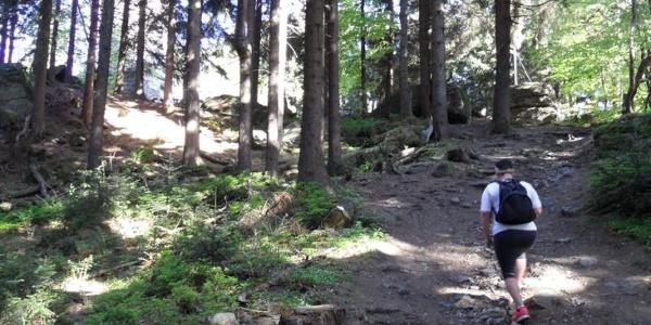 Durch den Wald geht des zum Sternsteingipfel hinauf.
