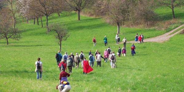 ÖkoRegio Tour Wandergruppe2 Streuobstwiese