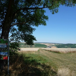 Blick vom Karlsberg ins Taubertal nach Tauberrettersheim