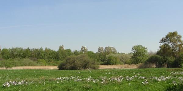 Naturschutzgebiet Kalkarer Moor