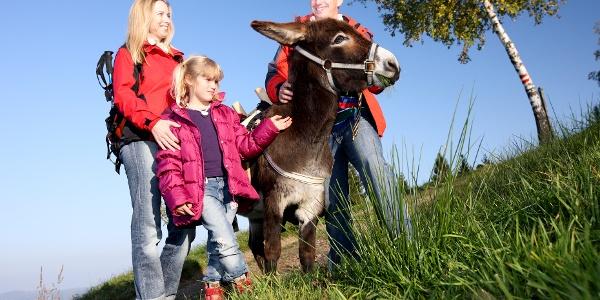 Eselwandern mit der Familie