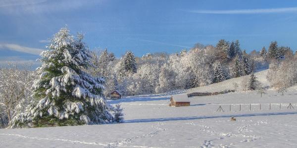 Schneeschuh-Laufen bei der Albrecht-Hütte