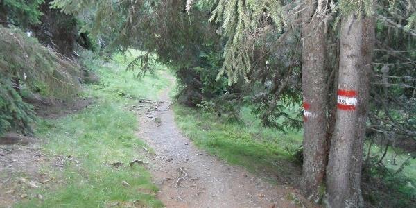 Der Waldweg führt zur Winkleralm