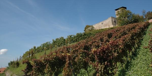 Weinlehrpfad im Schloßareal Hohenbeilstein