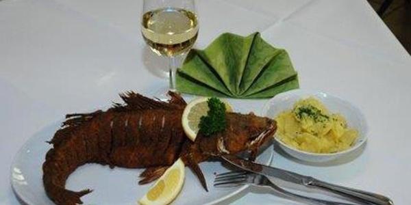"""Der """"Hausfisch"""" - Karpfen"""