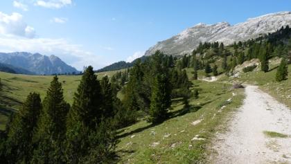 Über die ehemalige Militärstraße erreichen wir die Plätzwiese mit dem Dürrenstein.