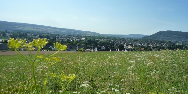 Blick in das Wesertal vom Corveyer Weinberg