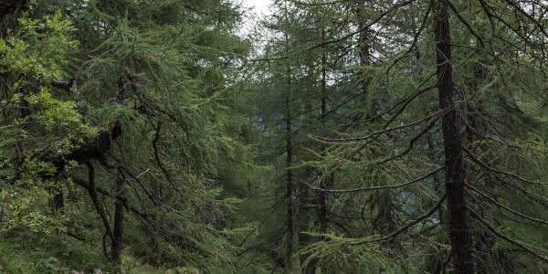 Waldpartie