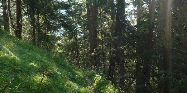 Schleifwandsteig im Wald