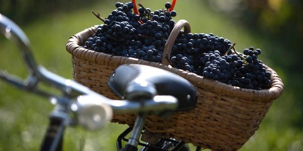 Weinbau Retter-Kneissl