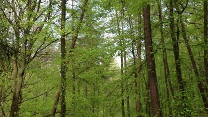Herrliche Waldwege am Königsberg