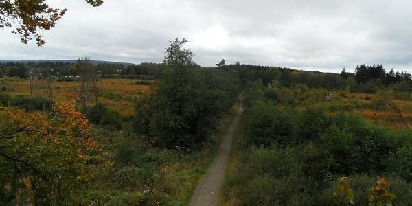Venn-Landschaft