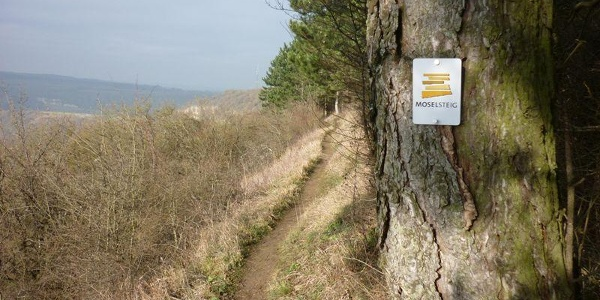 Along the edge of the slope: the Nittel Cliff Path