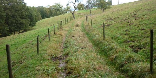 Wiesenweg durch Weideflächen mit alten Obstbäumen am Sirzenicher Bach