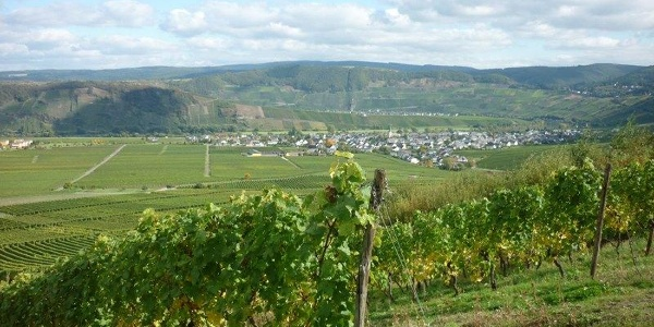 One of the largest wine-growing villages on the Central Moselle: Leiwen