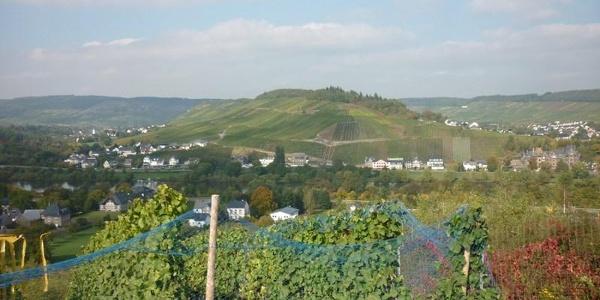 Blick aus den Mülheimer Weinbergen auf den Umlaufberg bei Lieser