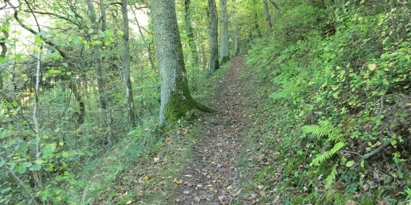 Sentier dans la vallée du Kallenfels