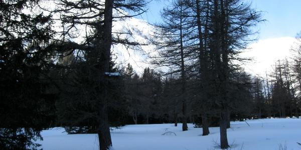 Man stapft durch den lichten Wald ...