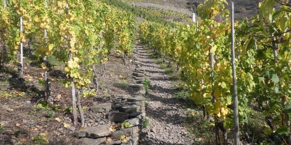 Climb through the vineyards to the Bleidenberg