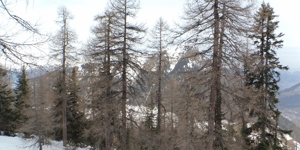 Aufstieg durch den dichten Wald, der nach obenhin immer lichter wird.