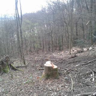 """Im Waldstück """"Kleff"""""""