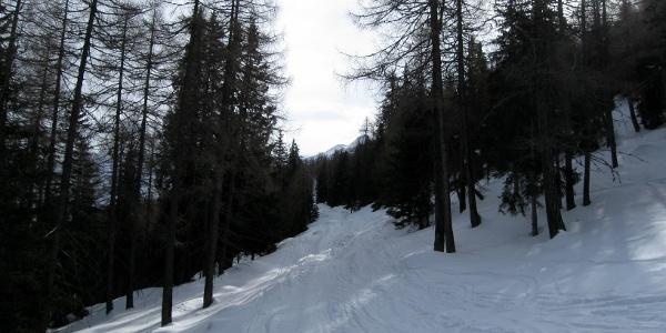 Durch den lichten Wald bzw. diese Waldschneise geht es direkt auf den Gipfel zu.