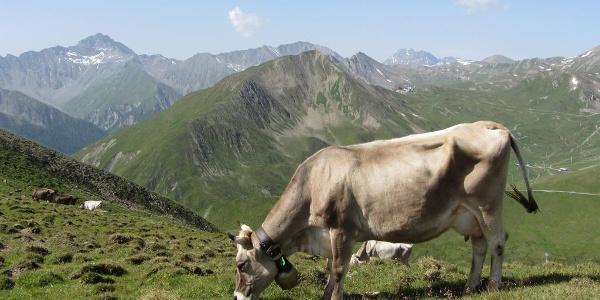 Fliesseralpe und Alp Bella